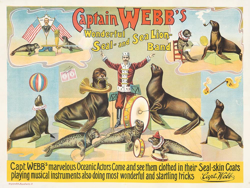 125. Captain Webb's Sea Lion Band. Ca. 1895.